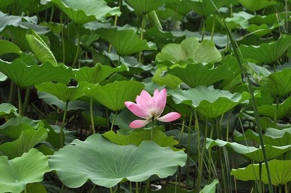 心掛け一つで自分も周りも幸せになる、仏教の7つの「お布施」