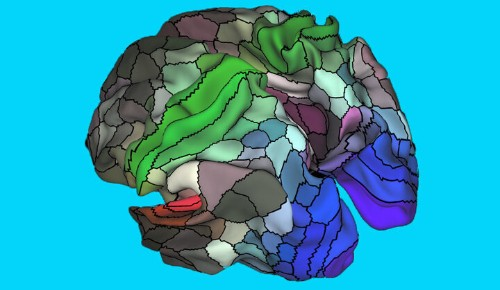 New Map Of The Brain Identifies 97 Previously Unknown Areas