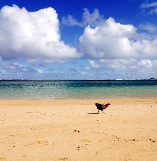 A Winter Road Trip Around Kauai