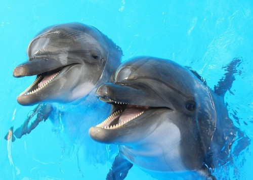 Scientists Want To Understand The Language Of Dolphins By 2021