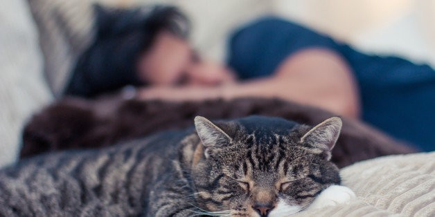 There Is Nothing 'Inappropriate' About Grieving the Death of Your Cat | HuffPost Life