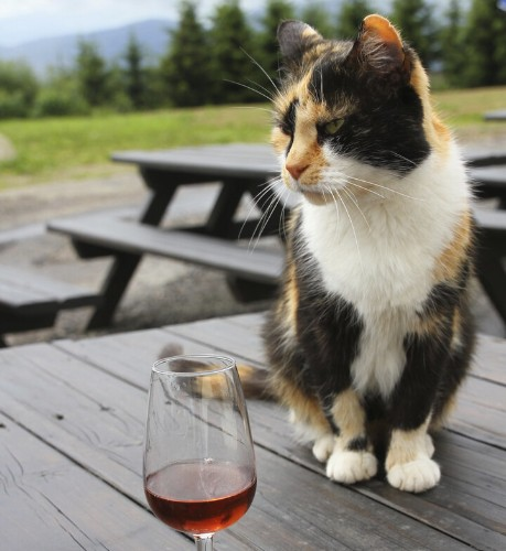 Boozing Cat Suffers Serious Hangover After 7 Weeks In Wine Cellar
