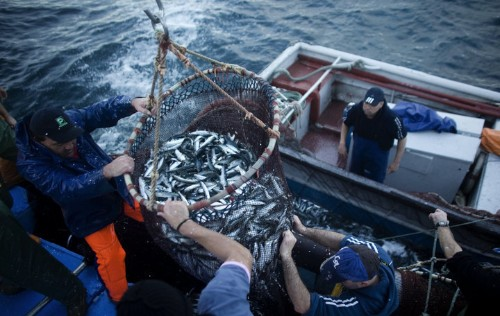 Sustainable Seafood Boom Brings Hope To An Overfished Planet