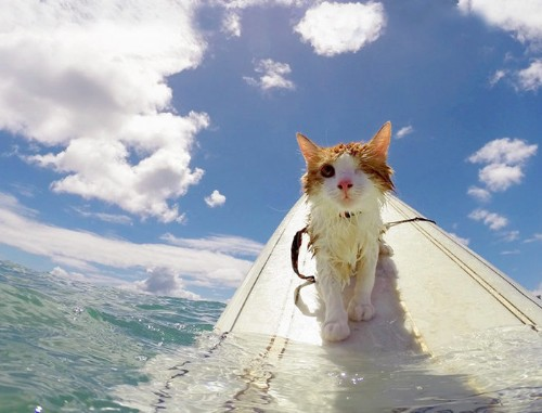One-Eyed Kitty Swims, Surfs And Is All Around Paw-some | HuffPost Life