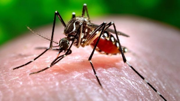 4 Billion People At Risk Of Being Infected With The Fastest Growing Mosquito-Borne Disease