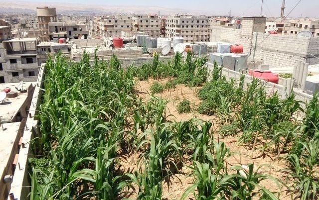 Damascus Residents Build Gardens To Feed Themselves