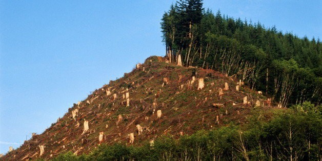 Deforestation: The Over-Looked Climate Driver and What You Can Do About It