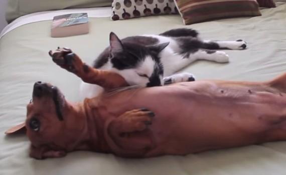 猫の癒しフォースは、ワンコにも効く