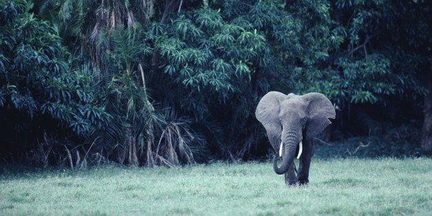 Bringing Awareness of Poaching and Trafficking on World Elephant Day