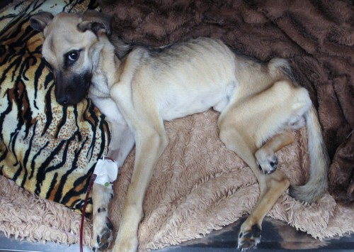 Dog Starved To The Brink Of Death Undergoes 'Miracle' Transformation