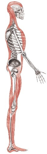 Stop Stretching Your Hamstrings!    HuffPost Life