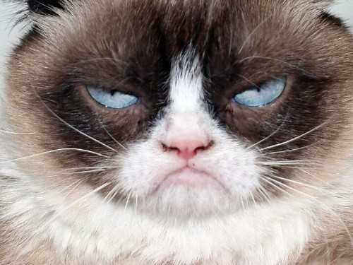 Grumpy Cat And Her Humans Are Very Displeased With This Coffee Company