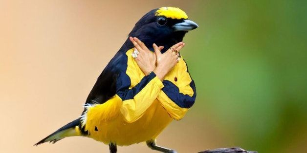Birds With Arms, Because Internet