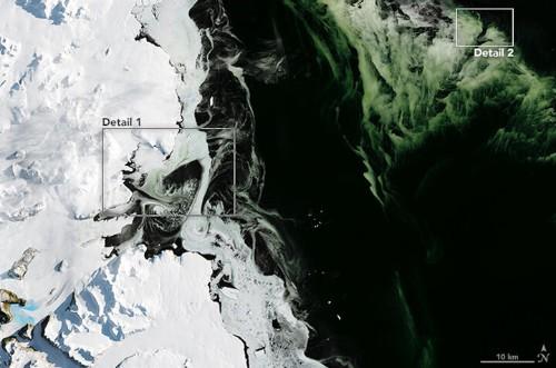 Weird Green Ice Floats In Antarctic Harbor