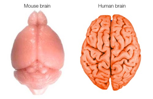 7 Cool New Findings About the Brain