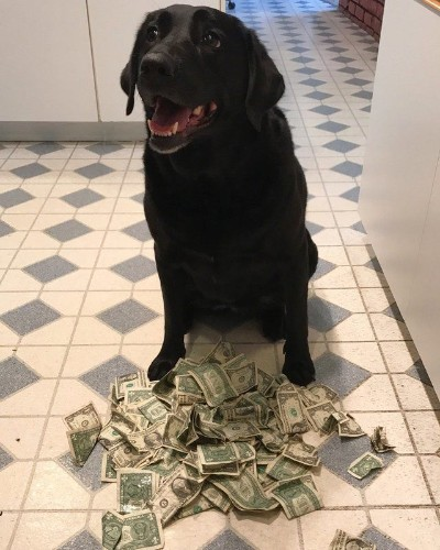 Dog Hoards Money So She Can Pay For Treats Herself