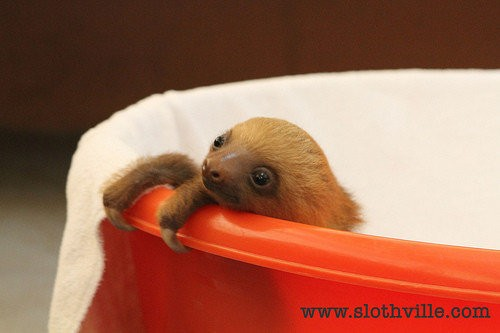 The Sloth Olympics (PHOTOS)