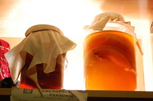 What Kombucha Really Is, For Those Of You Who Drink It But Don't Really Know