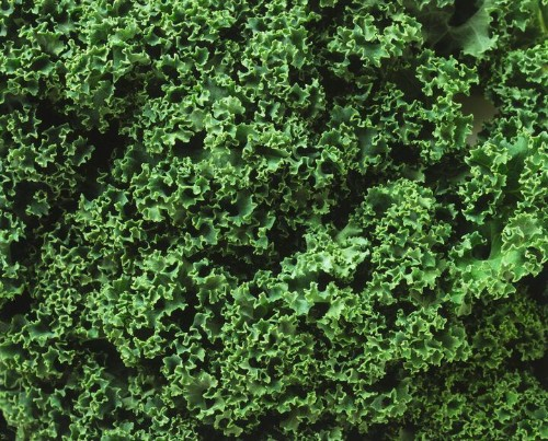 So THAT'S The Reason We Should Be Eating Kale | HuffPost Life