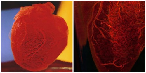 Need Offbeat Valentine's Ideas? Take Your Sweetheart to See These Human Hearts!