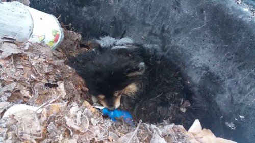$2,500 Reward For Info On Whoever Left This Puppy In A Freezing Trash Can