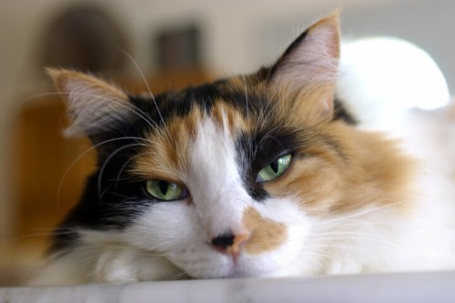 Some Cat Colors Linked To Aggression, But Don't Base Your Pet Choice On It