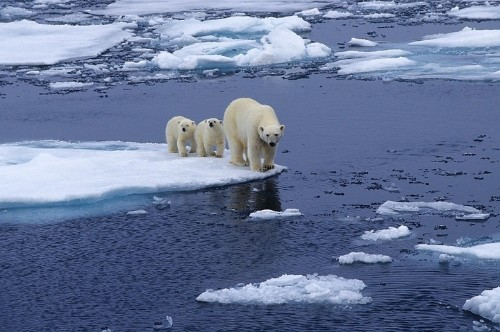 Sea Ice, Nature, And The Trump Budget