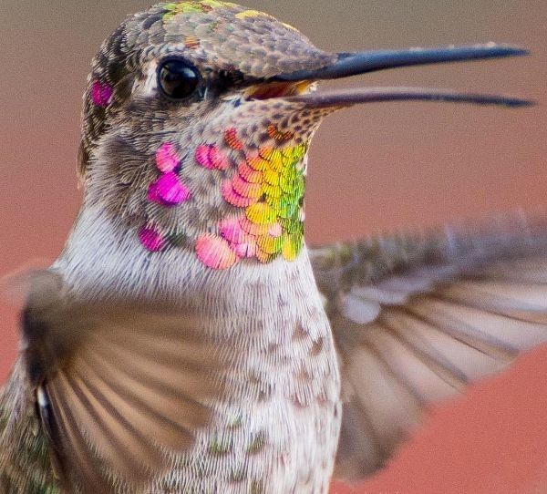 Photographer Captures The Multi-Colored Magic Of Hummingbirds