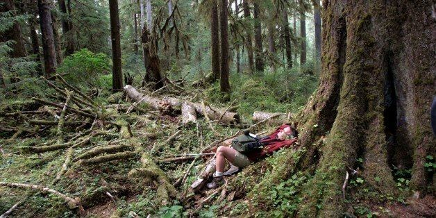 The Quietest Place In America Is One Square Inch In Olympic National Park | HuffPost Life
