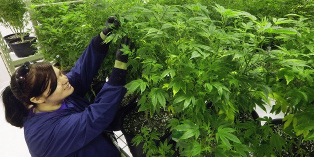 The Top 10 Marijuana Policy Victories of 2015