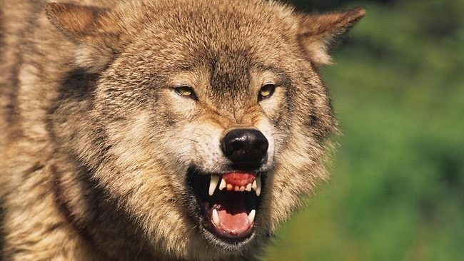 Trumpcare: A Wolf In Wolf's Clothing