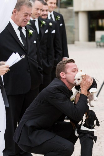 11 Animals At Weddings Who Are Better Dressed Than Guests