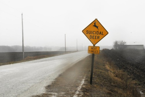 'Suicidal Deer' Sign Should Definitely Get Drivers' Attention