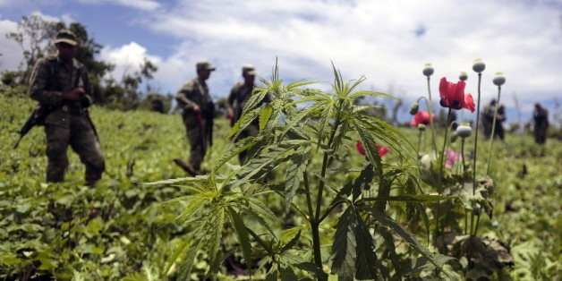 How Pot Legalization In The U.S. Hurts Mexico's Illegal Marijuana Industry