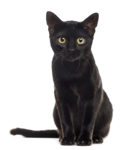 Stop Hating On Black Cats! It's National Black Cat Day!