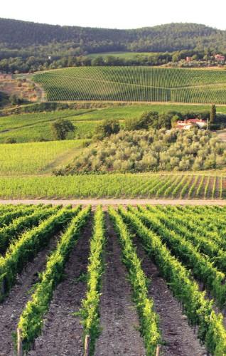 Peek Inside Tuscany's Most Famous Wine Cellars | HuffPost Life
