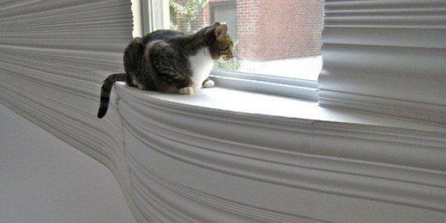 10 Ways to Keep Indoor Cats Happy   HuffPost Life