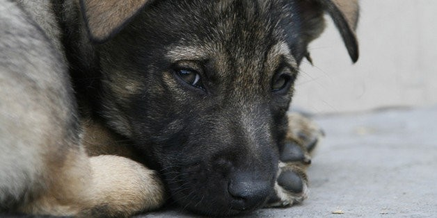 Animal Abuse Registry Created To Track Convicted Offenders
