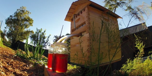 Meet The 'Flow Hive,' A Sweet Invention That Serves Honey On Tap | HuffPost Life