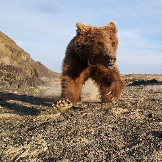 15 Amazing Wild Animals on Instagram