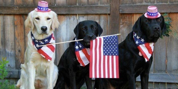 A Lot Of Dogs Will Go Missing Over 4th Of July Weekend. Here Are 9 Tips To Make Sure Yours Won't. | HuffPost Life