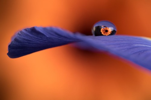 Stunning Works Of Macro Photography Ask You To Look Closer