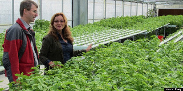 Local Farming Void? Military Veterans Are Answer | HuffPost Life