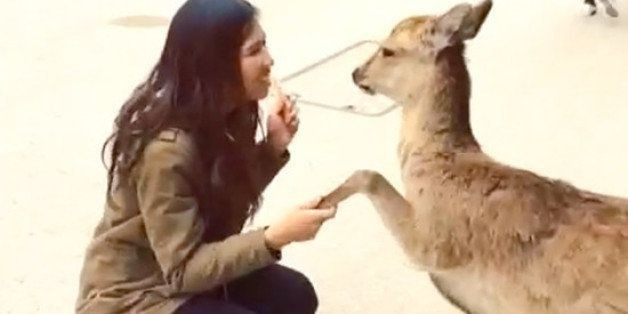 On This Island In Japan Deer Act Like Dogs
