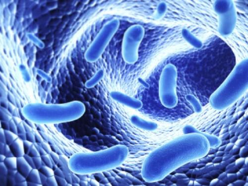 Gut Imbalance: The Modern Plague and Hidden Epidemic