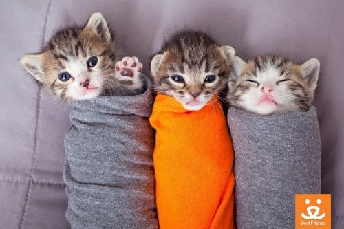 Help Shelter Cats As A Volunteer Snuggler At These Kitten Nurseries