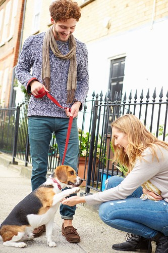 Single in the City and Want a Dog? 10 Things to Consider Before Taking the Plunge
