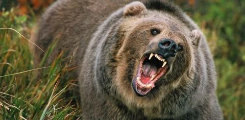 Grizzly Attacks School of Salmon. Dozens Dead.