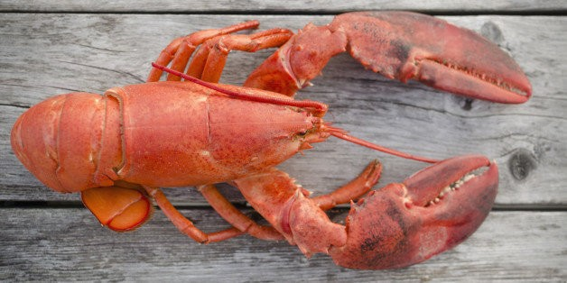 Lobsters Pee From Their Faces And 8 More Facts About Our Favorite Crustaceans