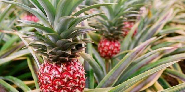 17 Mind-Boggling Facts About Pineapples